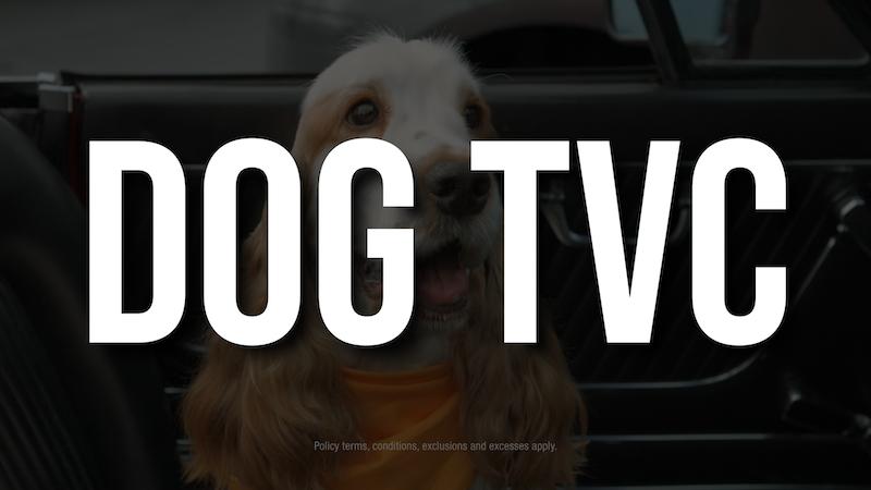 Dog TVC
